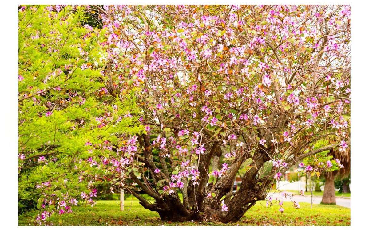 Intermission // Spring
